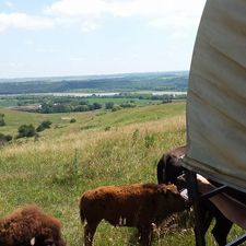 A view from the top of the hill in the Bison pasture.