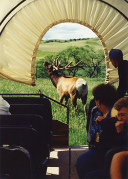 Nebraska Elk Tours